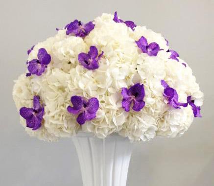 Matrimonio Azzurro Ortensia : L ortensia desiderio di matrimonio